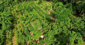 Agrofloresta. Brasil. Recuperado em 30 de março de 2020, de https://steemit.com/agrofloresta/@rogerbage/10-caracteristicas-principais-da-agrofloresta